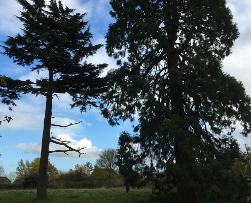 1 point a lyppard conifers