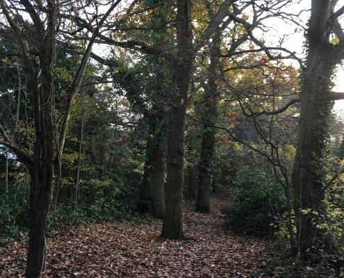 17 tall oaks