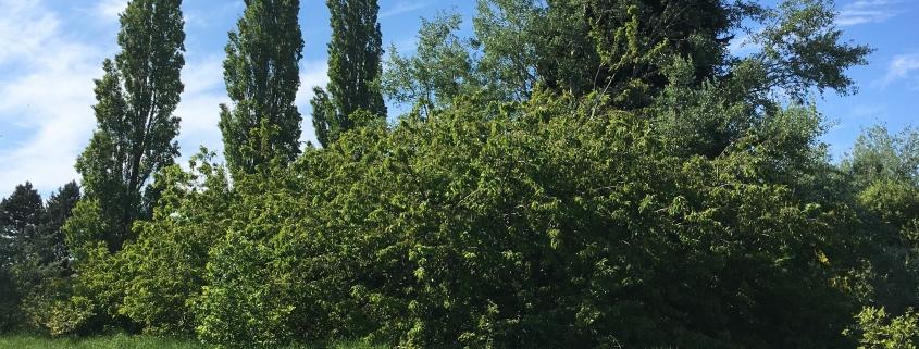 The TPO Trees On Darwin Fielddarwin field