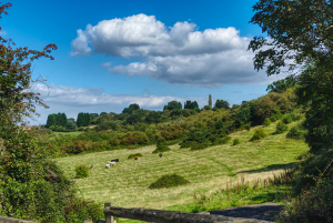 The view over Ronkswood Hill Meadows